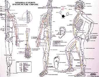 planche m 233 ridiens et points d acupuncture chinoise